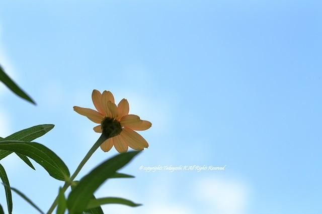 1DX_9654.jpg