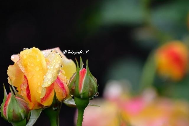 7D_24851.jpg
